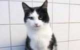 У Норвегії кіт вижив після 40 хвилин обертання в пральній машині