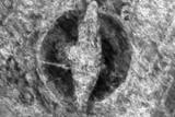 Стародавній корабель з тілом вікінга знайшли посеред поля