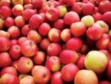 Названы фрукты, вредные для здоровья печени